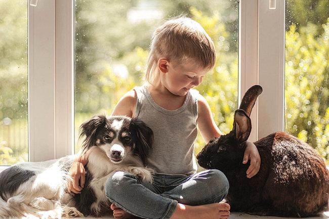 Польза домашних животных для иммунитета детей